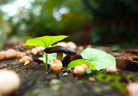 Wild tiny mushroom and green leaves on stump in forest close-up photo with very short focus