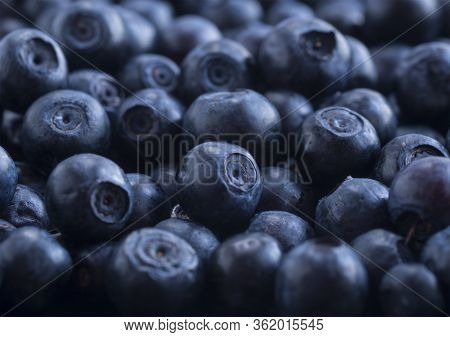 Macro Photo. Fresh Blueberry Background. Ripe Bilberry Background. Texture Bilberry Berries Close Up