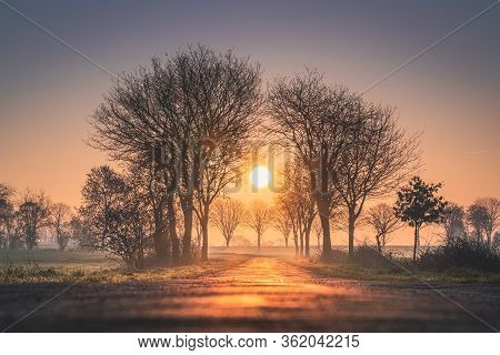 Forest Trees Sunset Silhouettes Background. Sunset Forest Trees Sunlight Silhouette. Forest Trees Su