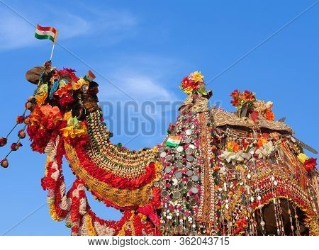 Beautiful Amusing Decorated Camel With Indian Flags On Bikaner Camel Festival In Rajasthan, India. T