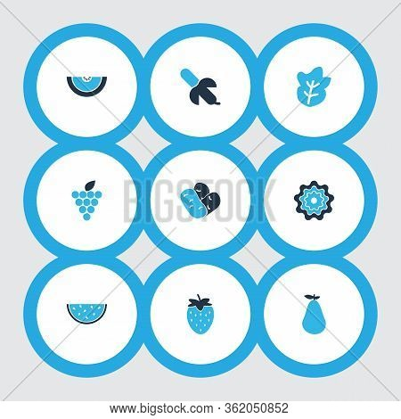 Food Icons Colored Set With Grapes, Beans, Cantaloupe And Other Haricot Elements. Isolated Vector Il