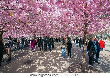 STOCKHOLM, SWEDEN - APRIL 29, 2012: People walking in a flowery park, Kungstradgarden, Stockholm, Sweden