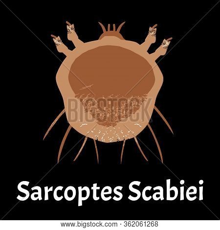 Sarcoptes Scabiei. Scabies. Sexually Transmitted Disease. Infographics. Illustration On Isolated Bac