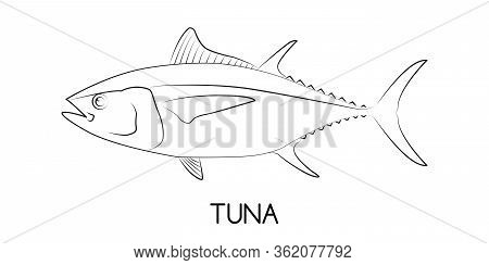 Tuna. Commercial Fish Species. Colored Vector Illustration. Linear Icon. White Isolated Background