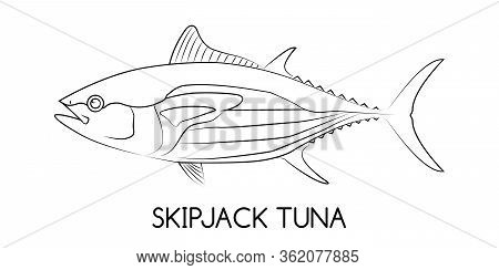 Tuna. Skipjack Tuna. Commercial Fish Species. Colored Vector Illustration. Linear Icon. White Isolat
