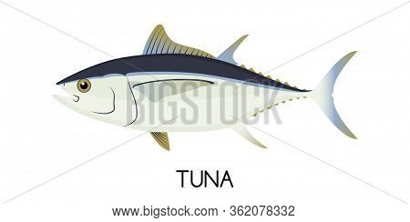 Tuna. Commercial Fish Species. Colored Vector Illustration. Flat Icon. White Isolated Background