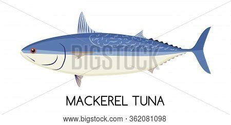 Tuna. Mackerel Tuna. Commercial Fish Species. Colored Vector Illustration. Flat Icon. White Isolated