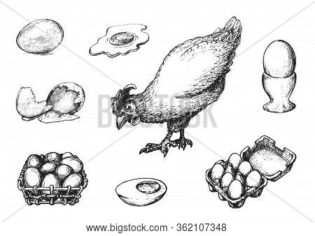Graphic Illustrations Of Poultry Farm Goods In Vector. Hand Drawn Set Of Hennery Production In Engra