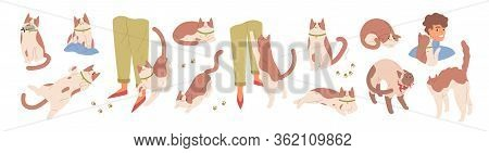 Collection Of Scenes With Cute Cat. Various Pet Emotions. Friendly, Scared, Sharing Food, Ready To A