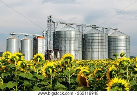 Silo In A Sunflower Field. Grain Elevator Silos.