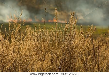 Fire In The Forest, Nature Disaster. Ecological Catastrophe