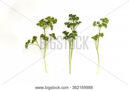 Three Sprigs Of Parsely Isolated On A White Background