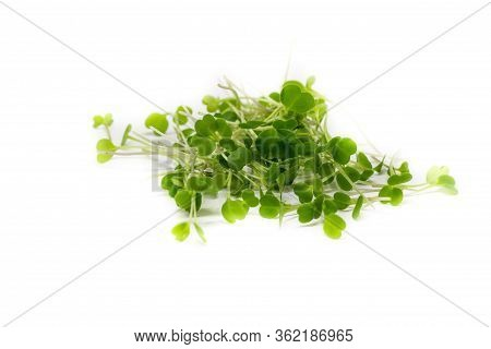 Young Sprout Microgreen Isolated On White Background. Microgreen Arugula Sprouts. Healthy Eating Con