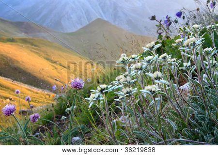 Flowers in an alpine slope