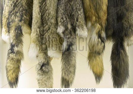 Close Up Of Set Wolf Skins Pattern. Wild Animal Toxidermic Skins