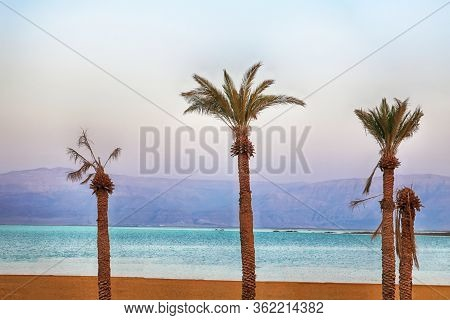 Dead Sea Resort In The Evening, Ein Bokek, Dead Sea, Israel