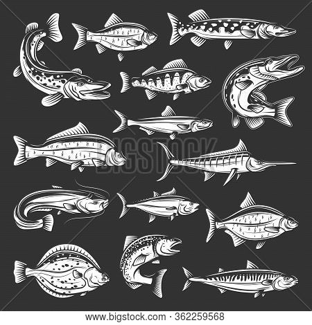 Vector Salmon, Carp And Tuna, Marlin, Mackerel And Perch, Pike, Swordfish And Flounder, Crucian And