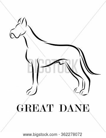 Black Line Drawing On White Background Of Great Dane Dog. It Is Standing