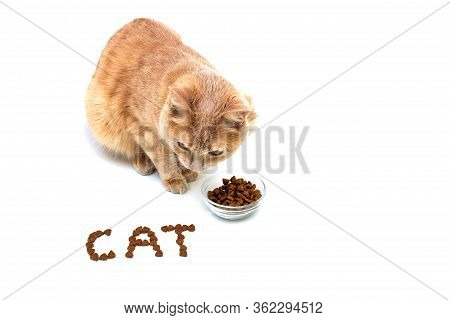 A Red Cat Near A Bowl Of Dry Cat Food On A White Background. The Cat Is Lined With Dry Cat Food. Pet