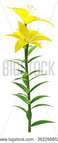 3D Rendering Yellow County Asiatic Lily On White