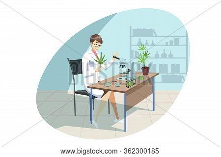 Marijuana, Cannabis, Medical Research, Analysis Concept. Young Woman Doctor Chemist Does Marijuana M