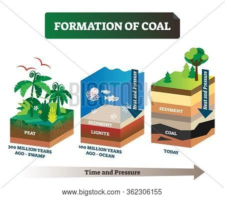 Formation Of Coal Vector Illustration. Labeled Educational Rock Birth Scheme. Carbon Stone Diagram F