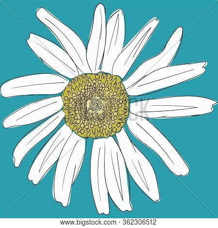 White Daisy Chamomile On A Blue Background. Cute Flower Plant Collection. Love Card. Camomile Icon G