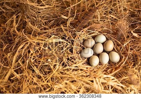 Top View Pheasant Eggs In A Wooden Wicker Basket On A Straw With Copy Space. Diet Food. Healthy Life