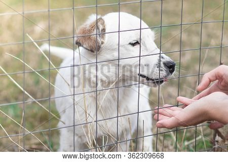 Hands Of Person Playing With A Dog In A Pet Shelter. Sad Puppy, Lonely Dog Behind Bars. Kennel, Stra