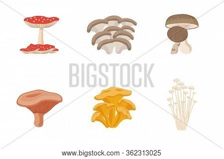 Edible Mushrooms Set. Vector Illustration Of Different Types Of Mushrooms. Collection Of Assorted Ed