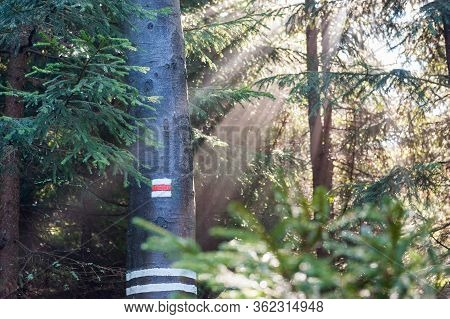 Red Tourist Mark Isolated On A Tree In Bright Sunny Light In Beskydy Mountains, Czech Republic. Czec