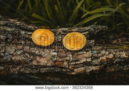 Two Gold And Shiny Coins Of Bitcoin (cryptocurrency) On The Wooden Background In Forest. Btc Coins I
