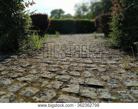Cobblestone Road In The Park Between Clipped Bushes. Bokeh Effect. Old Stones. Defocus On The Edges