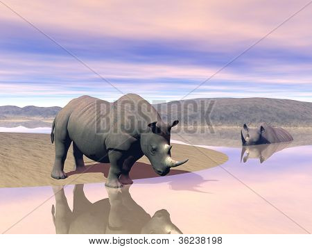 Thirsty rhinoceros drinking water next to another having a bath in the savannah by evening light poster