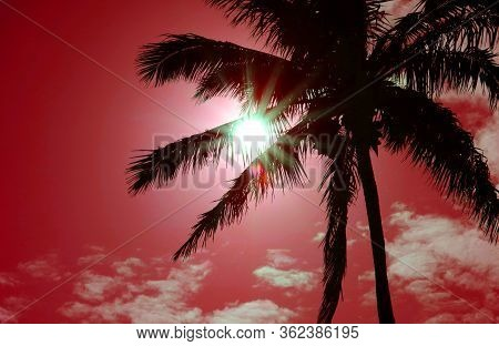 Pop Art Style Vibrant Colored Dazzling Sun Shining Through The Silhouette Of Palm Tree