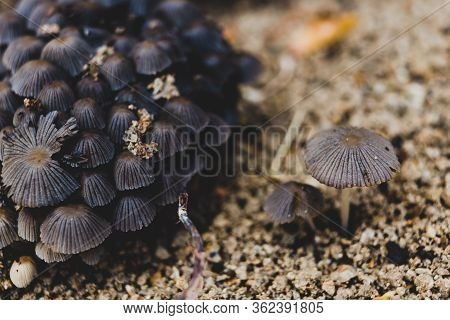 Close-up Of Toadstool Mushrooms Outdoor In Sunny Backyard