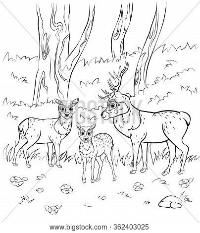 Coloring Page Outline Of Cute Cartoon Deer Family. Vector Image Of Male Deer, Female Doe And Little
