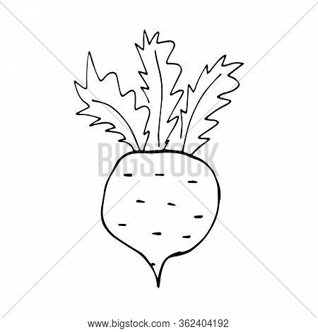 Caricature of radish without fill on an isolated white background. Doodle style. Vector and stock illustration. For print on fabric, clothes, wallpaper, icon for social network.