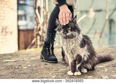 Homeless Cute Cat Loves When A Girl Strokes Him. Homeless Animals Protection Concept. A Spotted Lovi