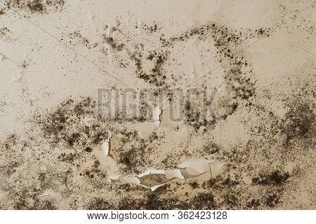Black Mold And Mildew Spots On The Ceiling Or Wall Due To Poor Air Ventilation And High Humidity. Ha