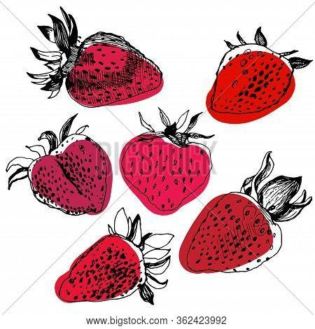 Great Collection Of Hand Drawn Strawberries Isolated On White Background. Big Set Of Realistic Sketc