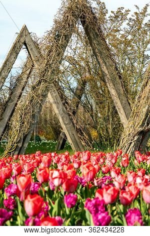 Britzer Garten, Berlin, Germany - April 16, 2020: Part Of  The Due To Corona Barricaded Tulipan 2020