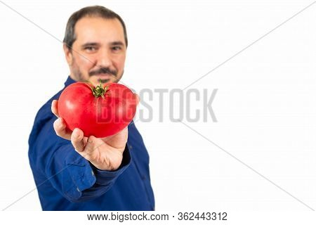 Unfocused Man In A Blue Shirt Showing A Tomato On Camera