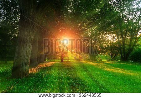 Summer landscape - colorful summer city park with deciduous summer  green trees and sunset light breaking through the tree branches, summer sunny landscape. Summer park nature