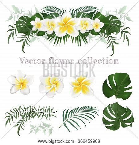 Vector Border Of Frangipani Flowers And Plants. Compositions Of Plants. Plants Isolated On A White B