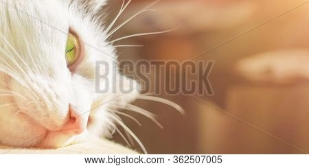 Head Of White Cat With Large Whiskers