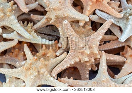 Dry Starfishes On The Counter In The Market. Abstract Background Of Starfishes