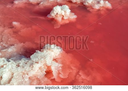 Salt mining industry. Salty pink lake with crystals of salt. Extremely salty pink lake, colored by microalgae with crystalline salt depositions in Torrevieja, Spain, Europe