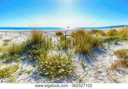 Landscape Of Grass And Flowers In Sand Dunes On The Beach La Cinta. Turquoise Water And White Sand.