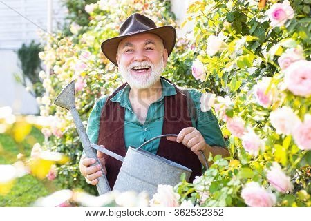 Middle Aged Man Portrait Holding Watering Can On Roses Garden. Gardening Hobby. Spring Gardening Rou